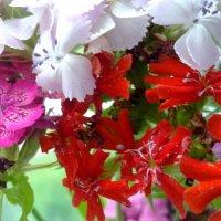 Краски лета :: Svetlana Lyaxovich