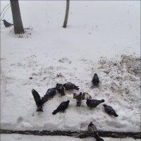 Недоверчивая ворона :: Нина Корешкова