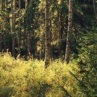 Русский лес. :: сергей лебедев