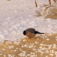 Из зимней жизни птиц :: Татьяна Ломтева