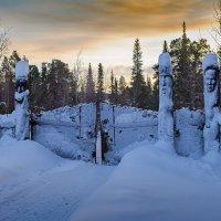 Стражи леса :: Игорь Чубаров