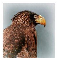 Красивый птиц и очень гордый. :: Rodef