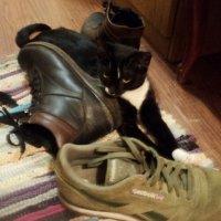 Лучший сторож ботиночек, это кошка! :: Ольга Кривых