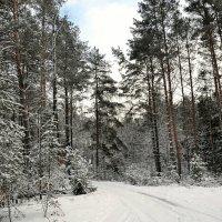 В зимнем лесу :: Милешкин Владимир Алексеевич
