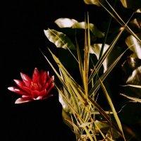 Лилия в цвете :: Михаил Новиков