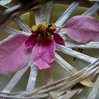Листочки пуансетии :: Нина Корешкова