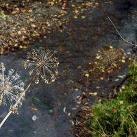 Лесной ручеек в обрамлении осени :: Екатерина Торганская