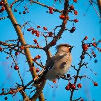 Зима :: Марина Киреева