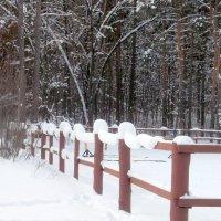 снежная гирлянда на заборе :: Вячеслав Афанасьев