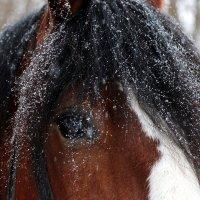 Снежный денёк :: Екатерина Цой