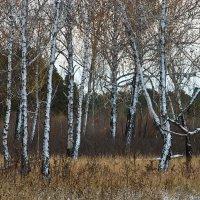 Холодная зима впереди :: Евгений Карский