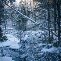 Зимние картинки :: Алёнка Шапран