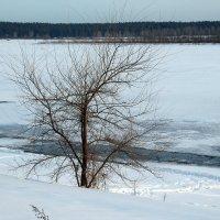 Одинокий :: Олег Афанасьевич Сергеев