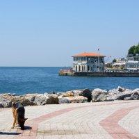 Прогулка (повседневная жизнь Стамбула) :: Юлия Фотолюбитель