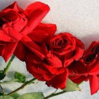 Три алых розы на снегу. :: Валентина ツ ღ✿ღ