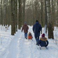 Прогулка в зимний лес :: Геннадий Храмцов