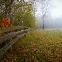Туманное утро в поскотине... :: Александр Никитинский