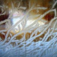 Морозные водоросли . :: Мила Бовкун