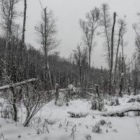 Зимние виды. :: Владимир Лазарев