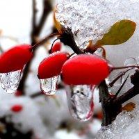 Хрустальный лед :: Валерий Кишилов