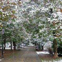 Немного снега для разнообразия... :: СветЛана D