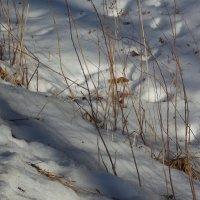 Прошлогодняя трава :: Фотогруппа Весна.