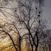 Новый день начинается :: Sergey Kuznetcov