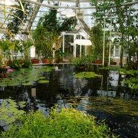 Ботанический сад :: Ольга Васильева