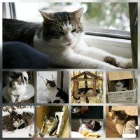 Жизнь кота Марсика!!! :: Светлана Масленникова