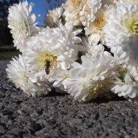 Цветы :: Дарья Логвинова
