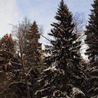 Зима! :: Ольга Разенкова