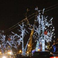 Новогодние деревья :: Дмитрий Никитин
