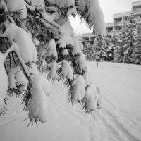 Зима :: Sergey Istra