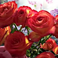 Розы, розы... :: Елена Семигина