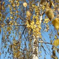 ...про осень... :: марина ковшова