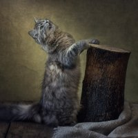Игра на апинти по-кошачьи :: Ирина Приходько