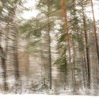 *** Зимний пейзаж из окна автомобиля. :: Евгений Поляков