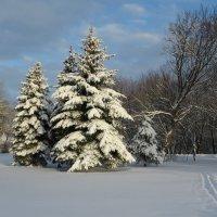 Зимний пейзаж :: Ирина Олехнович