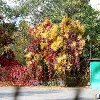 Осенние фейерверки ! :: ЕВГЕНИЯ