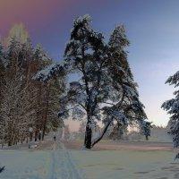 Заколдованные деревья :: Sergey Istra