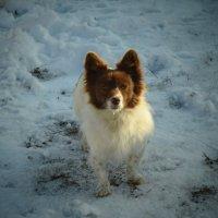 Возможность выбрать родственника выпадает человеку только один раз в жизни - когда он заводит собаку :: Лара Гамильтон
