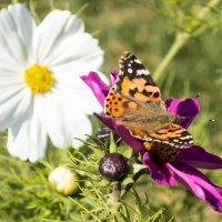Бабочки наслаждаются весной :: Kristina Suvorova