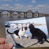 Результаты фотоохоты на пляжных котов... :: Алекс Аро Аро