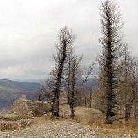 деревья :: Екатерина Панфилова