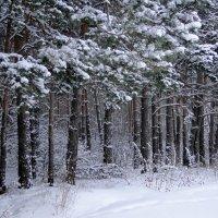 Снежный февраль :: Елена Шемякина