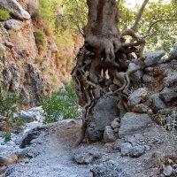 Среди скал и камней :: Владимир Брагилевский
