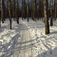 Зима с приметами весны :: Андрей Лукьянов
