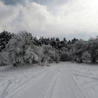 Зимний лес :: Наталья (D.Nat@lia) Джикидзе (Берёзина)