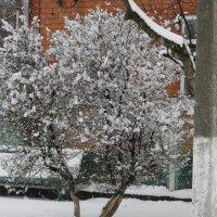 Можжевельник - снег ложится по другому. :: Вячеслав Медведев