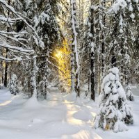 Зимнее солнце :: Виктор Заморков